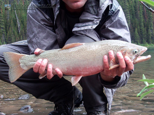 Marvel Lake Cutthroat Trout
