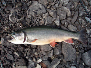 Owl Lake Brook Trout